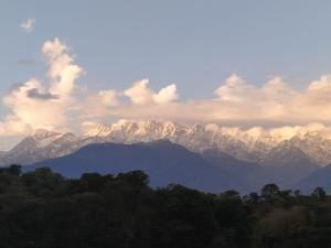 View from Tea estate