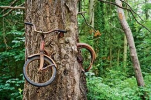 Photo by Ethan Welty/Tandem from http://blogs.sierraclub.org/sierradaily/2011/08/bicycle-eating-trees.html