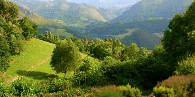 Naturaleza, montaña, verde, bosque, Bufon de Arenillas