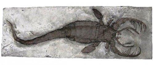 Ryby a Škorpión datovania