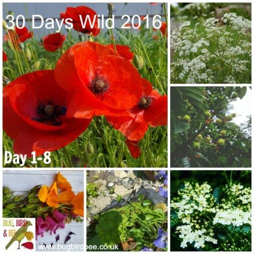 30 Days Wild 2016- Day 1- Day 8