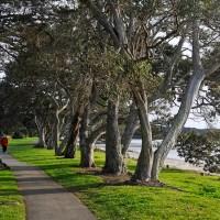 Snells Beach parking
