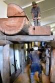 Pit sawing
