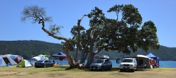 The Bland Bay tree which was struck by lightening recently and is now a shadow of its former self.