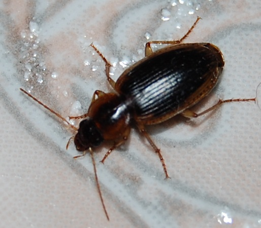 Difference Between Water Bugs And Roaches