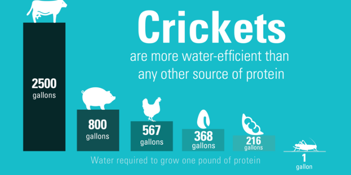 Crickets and Water Crisis