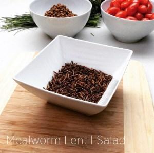 Mealworm Lentil Salad