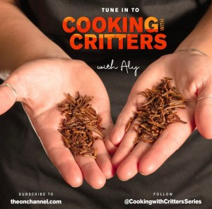 cooking with critters mealworms
