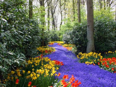 Jardines, jardines, jardines… | Bugratomba