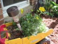 A nifty planter