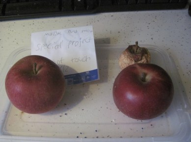 Two Easy Apple Experiments