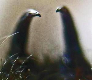 Mygalomorph Spider: Marvin W., Kempner, TX--11.12.08: fangs, showing venom ejection orifice