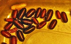 Parasitoid fly maggots and puparia