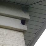 Animal nest 3