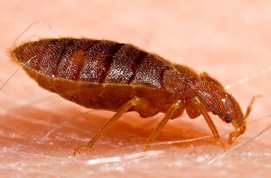 Bed Bug Control And Exterminating Bugs No More Exterminating Company