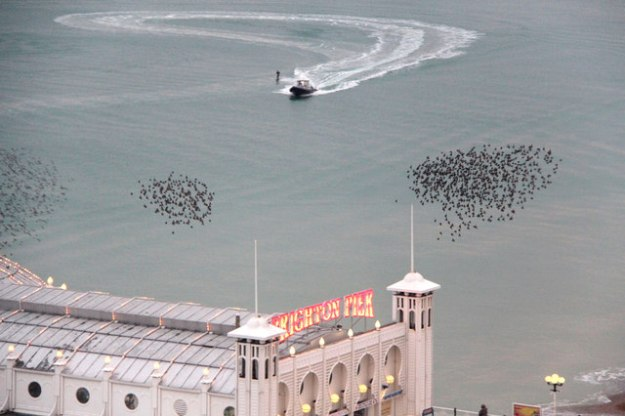 Starling Murmuration at Brighton Pier © Copyright Christine Matthews and licensed for reuse under this Creative Commons Licence http://creativecommons.org/licenses/by-sa/2.0/