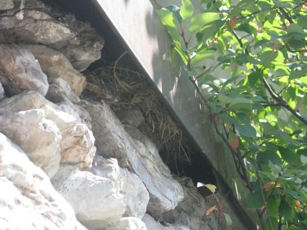 A comfy sparrow's nest