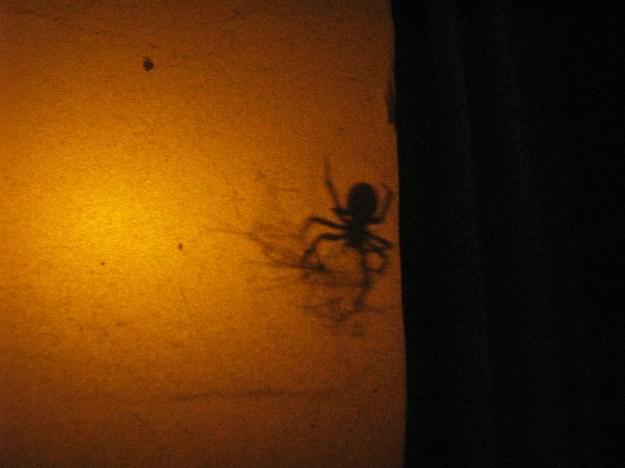 Blog Laceweaver Spider 014