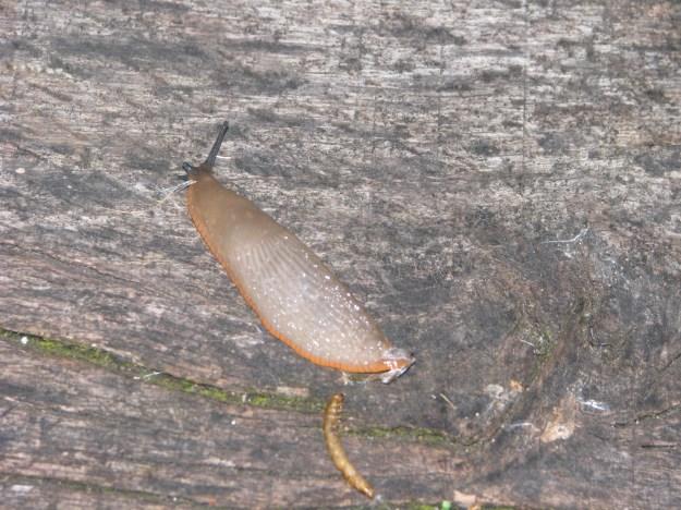 Slugs August 19 2014 004