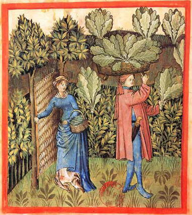 "Here, a Wattle gate is used to keep the animals out of the 15th Century cabbage patch (""Tacuinum Sanitatis-cabbage harvest"". Licensed under Public Domain via Wikimedia Commons - http://commons.wikimedia.org/wiki/File:Tacuinum_Sanitatis-cabbage_harvest.jpg#mediaviewer/File:Tacuinum_Sanitatis-cabbage_harvest.jpg)"