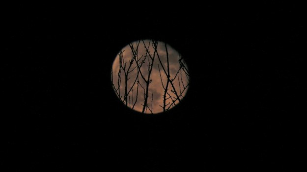 Supermoon apparently tangled in branches