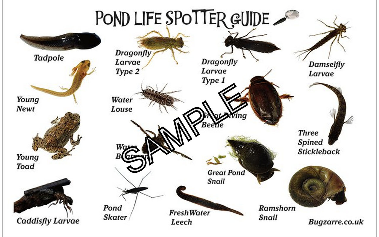 Insect Identification Guides Bug Amp Minibeast Guides
