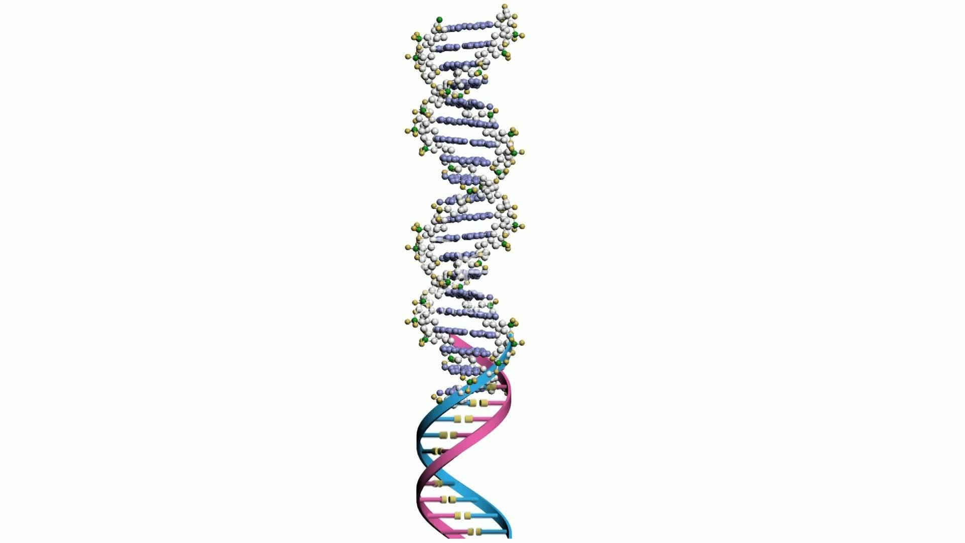 Dna Gene Genome Chromosome