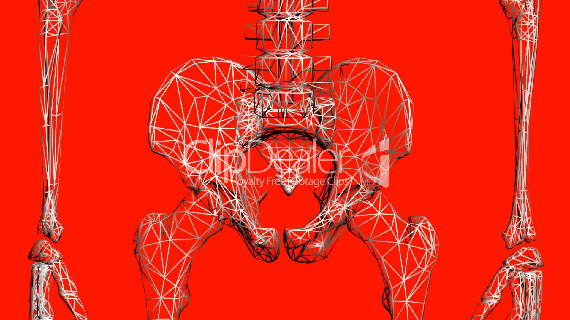 Rotation Of 3d Skeleton Hip Bone Pelvis Pelvic Anatomy Human Medical Body Skull Biology Medicine