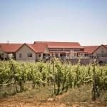 Fields in front of Bonobo Winery