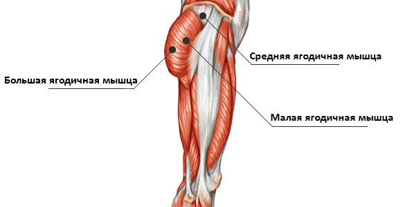 Ғимарат, анатомия