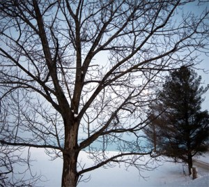 Protecting trees in winter