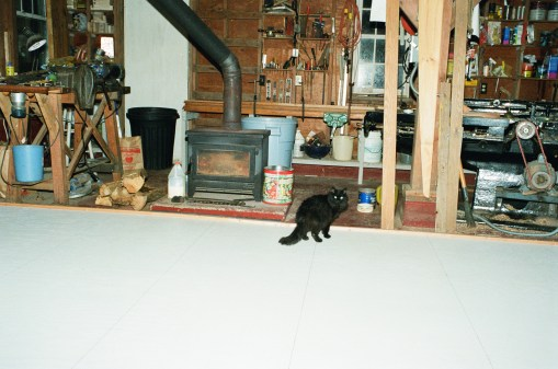 Bela the barn cat is not so sure about her new floor