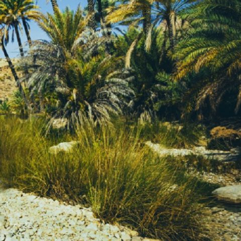 Dubai Hills Park at Dubai Hills Estate - Wadi Trails