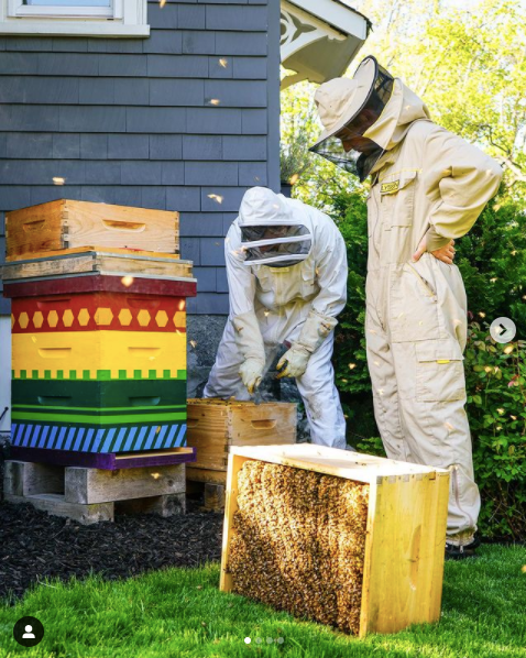 The Renovation Husbands painted their beehive bright colors for a fun element of surprise   Building Bluebird