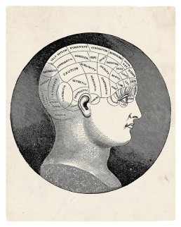 """""""The Parts of the Brain"""" print by StayGoldMedia on Etsy.com"""