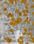 Cemetery 24 Cashman Walter PHC&M 60.jpg