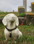 Cemetery 24 Sylvia