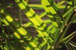 Sunny garden living #london #tooting #balham #palm #interior #inspirationoftheday #Blissful #exterior #exteriordesign #textile #pattern #foliage #leag #green buildmumahouse Jola Piesakowska garden design