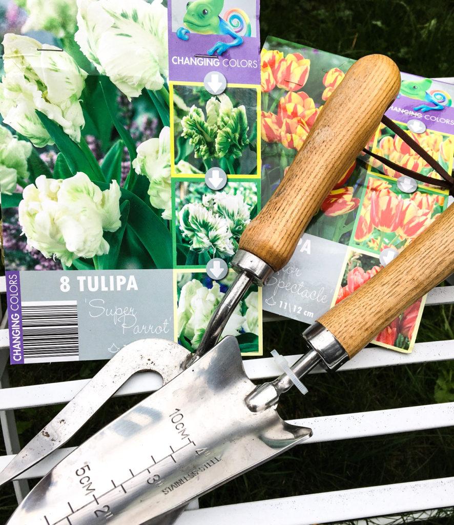 Plant bulbs in Autumn to cheer you up in Spring bulbs-buildmumahouse-jola-piesakowska