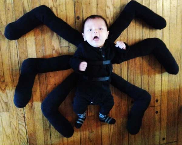 spider-floor
