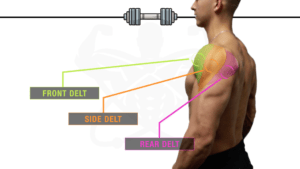 The Finest Science-Based mostly Dumbbell-Solely Shoulder Exercise For Development