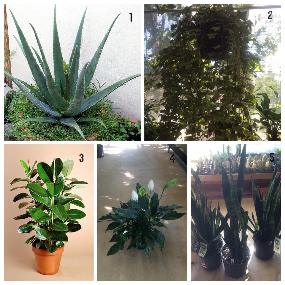 Las mejores plantas para el interior del hogar - Mejores plantas para interior ...