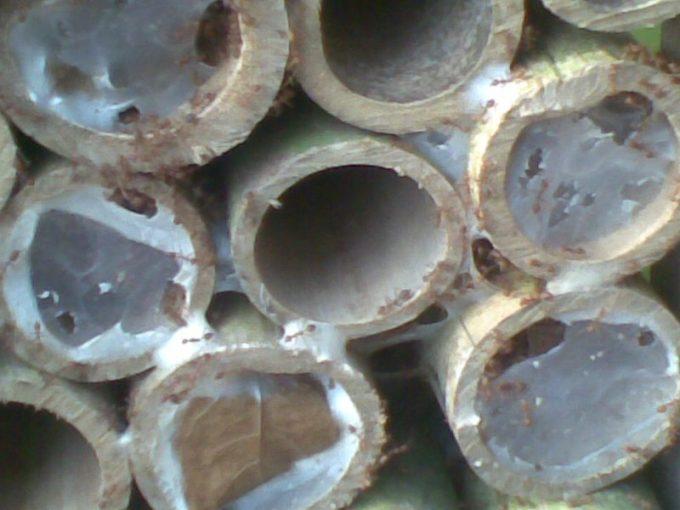 Media Bambu