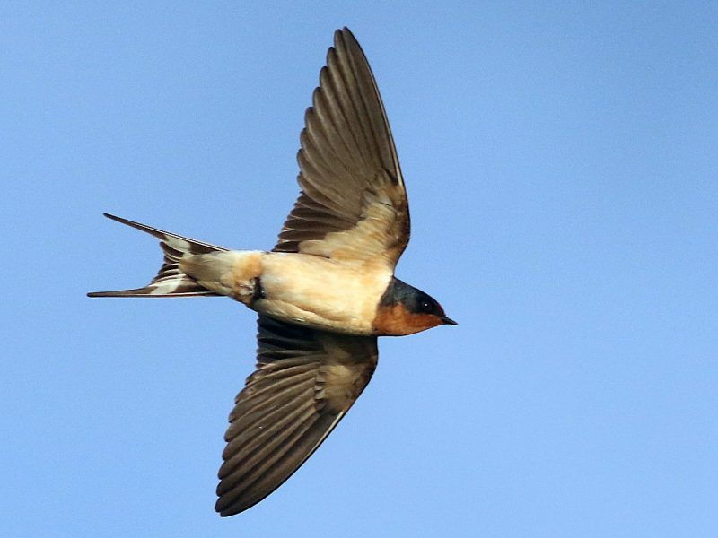 Budidaya Burung Walet
