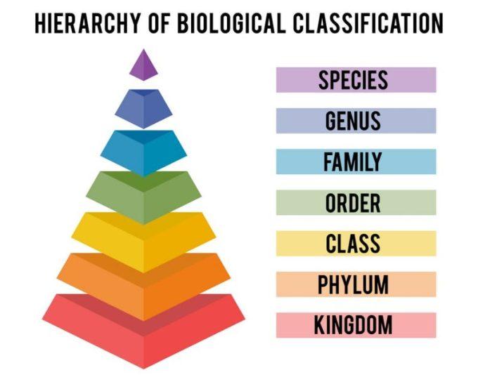 Nama Ilmiah Hewan dan Tumbuhan. Taksonomi