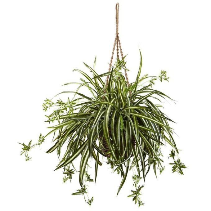 Tanaman Hias Dalam Pot. Spider Plant