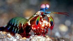 Contoh Hewan Invertebrata