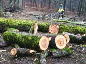 medžiai gargždai
