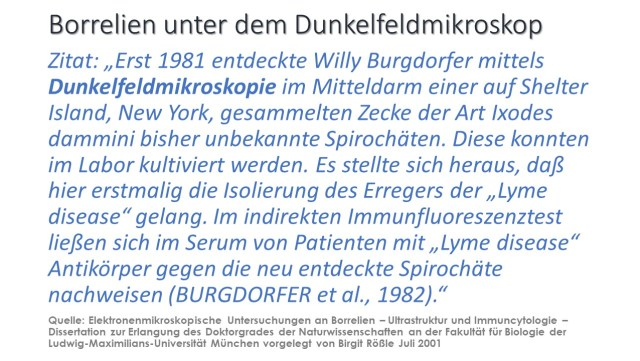 Willy Burgdorfer entdeckte Borrelia burgdorferi