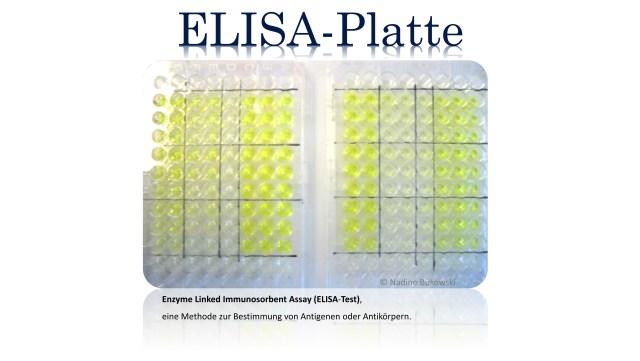 ELISA-Platte